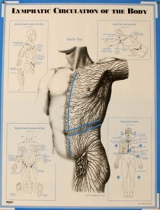 Lymphatic-Body-Chart-229x300