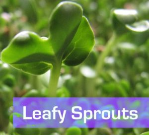 Leafy Sprouts
